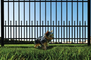 Keeping A Dog In The Backyard With Fence No Matter How